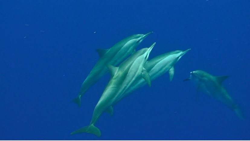 divingwithdolphins.jpg