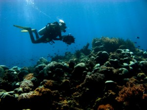 Allie and Rolf's Freediving Blog