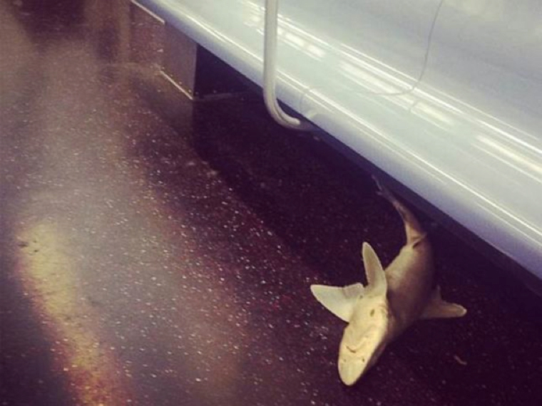dead-shark-subway.jpg