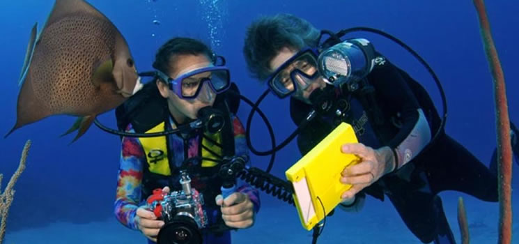 Courses - Underwater Photography