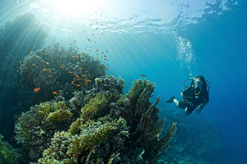 diving-the-red-sea-by-gavin-parsons.jpg