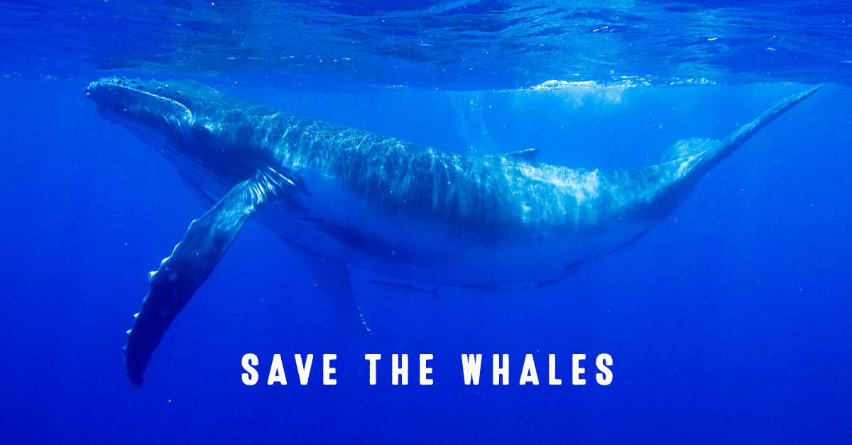 save-the-whales-page.jpg
