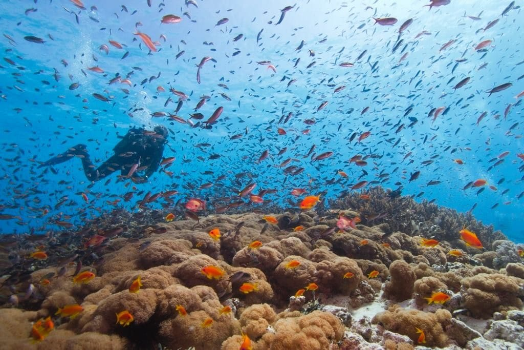 Latest Travel Deals from Sportif Dive Holidays