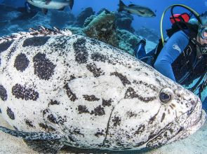 Mike Ball Dive Expeditions Video of the Month September 2019 (Watch Video)