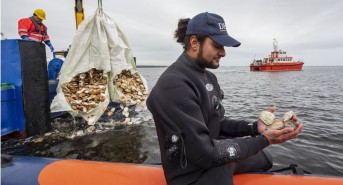 Heriot-Watt-student-Seb-Jemmett-with-the-Native-European-Oysters-destined-for-their-new-home-in-the-Dornoch-Firth-as-part-of-Glenmorangie's-DEEP-project.jpg