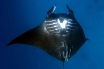 Nice-photo-manta-Agnieszka.jpg
