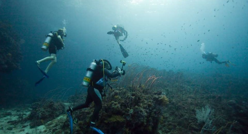 Dive Centre/Resort Of The Day: Scuba Cat Diving, Phuket