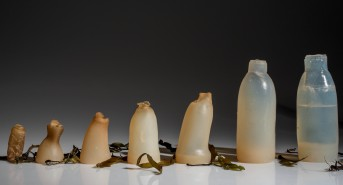 algae-water-bottle-by-ari-jonsson-designmarch_dezeen_ban.jpg